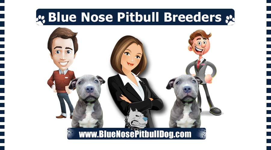 Best Blue Nose Pitbull Breeders