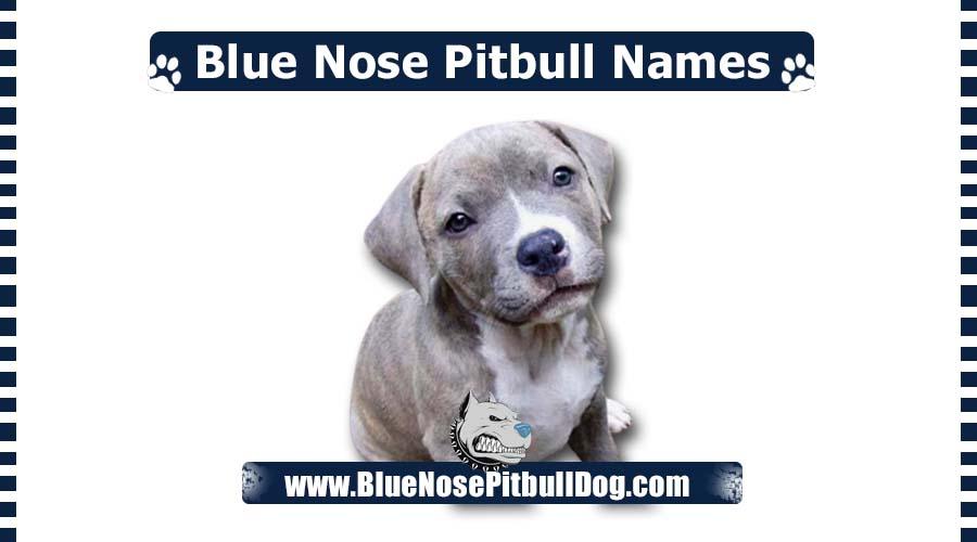 Blue Nose Pitbull Names