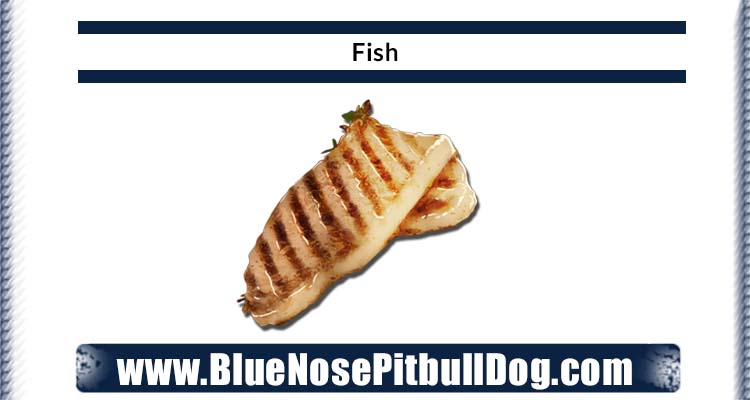 Cooked fish in the diet of blue nose pitbull