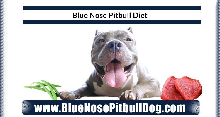 blue nose pitbull diet