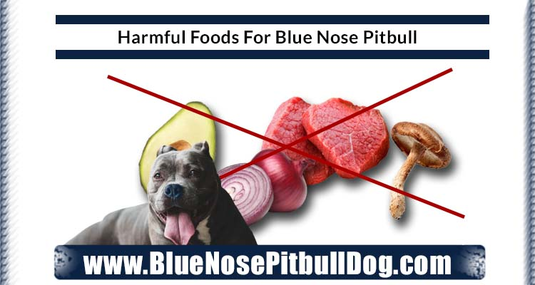harmful diet for blue nose pitbull
