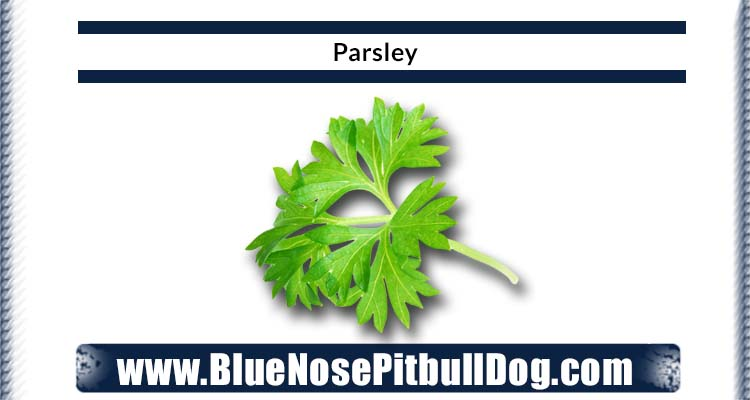 parsley diet for blue nose pitbull