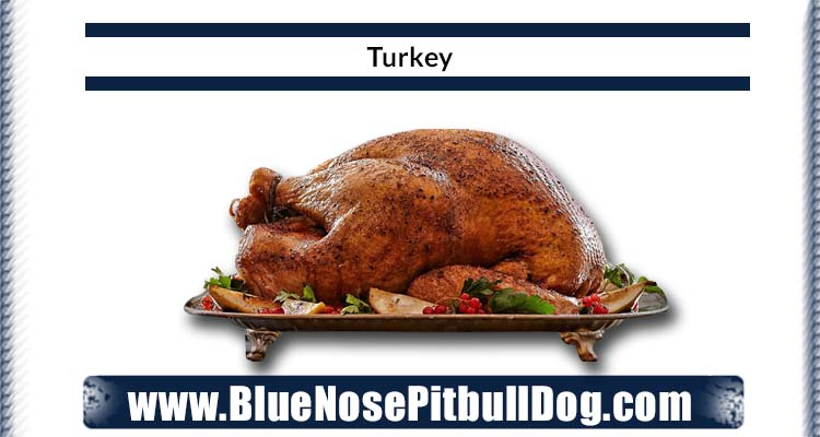 turkey diet for blue nose pitbull
