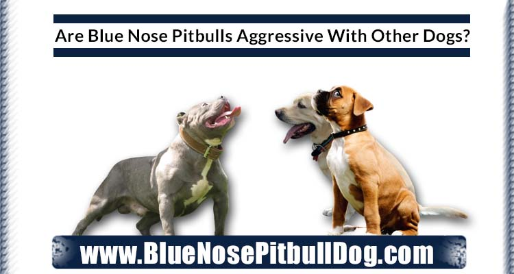 Are Blue Nose Pitbulls Aggressive With Other Dogs