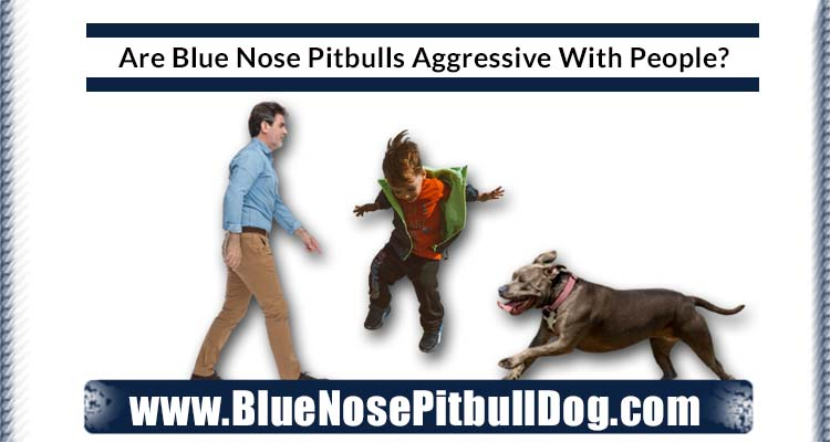 Are Blue Nose Pitbulls Aggressive With People
