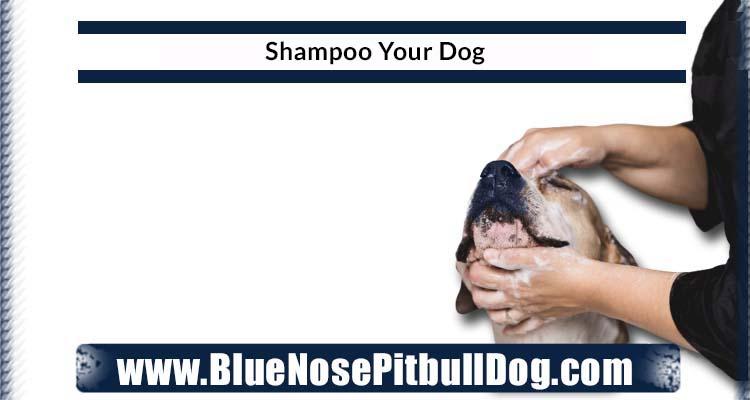 Shampoo Your Dog