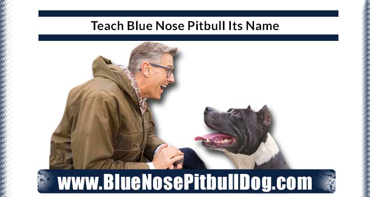 Teach your dog Its Name