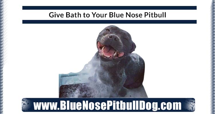 give bath to your dog