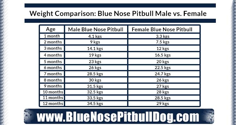 weight comparison of blue nose Pitbull male and female