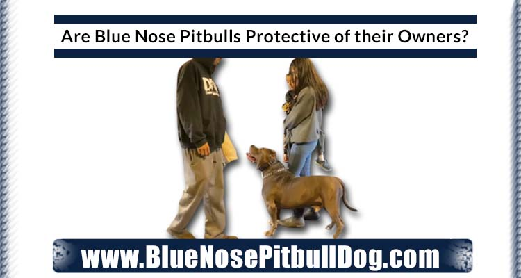 Are Blue Nose Pitbulls Protective of their Owners