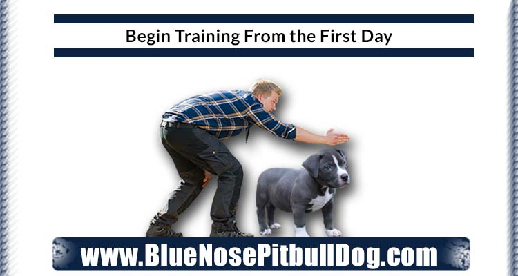 Begin Training From the First Day