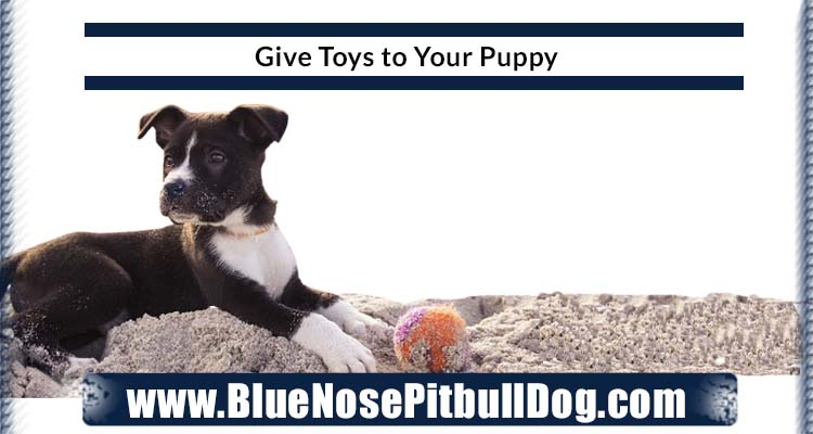 Give Toys to Your Puppy