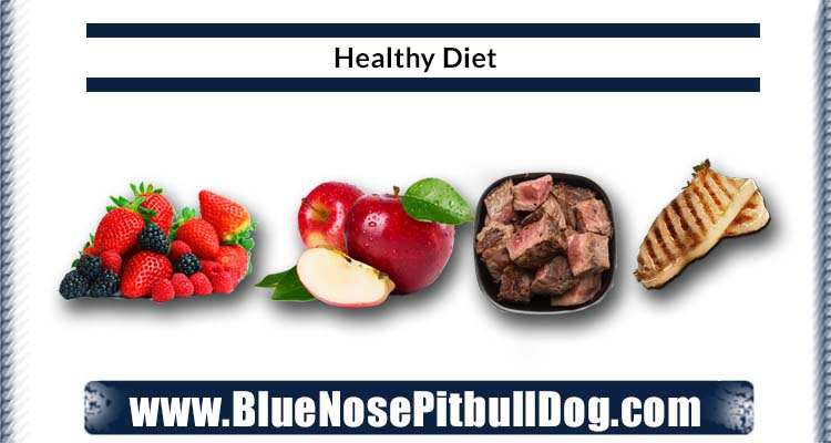 Give healthy diet to blue nose pitbull puppies if you care