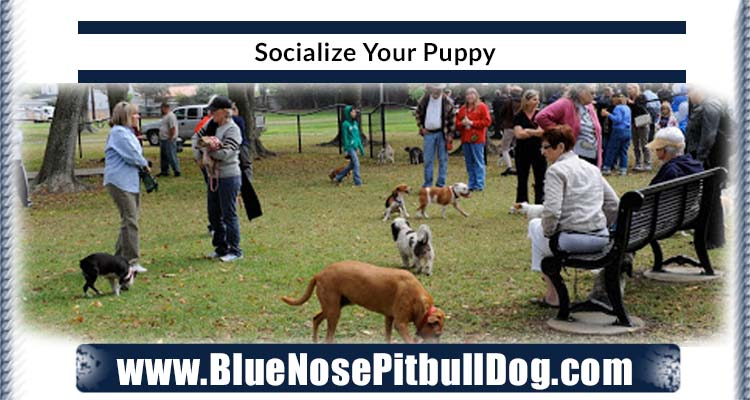 Socialize Your Puppy