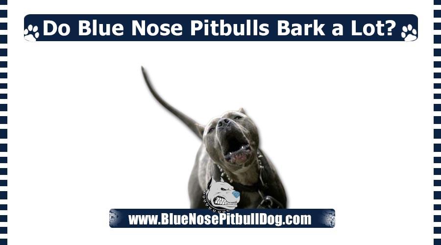 Do Blue Nose Pitbulls Bark a Lot