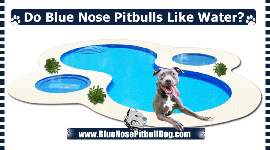 Do Blue Nose Pitbulls Like Water